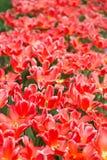 As flores e as camas de flor na cidade estacionam na primavera Imagem de Stock Royalty Free