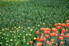 As flores e as camas de flor na cidade estacionam na primavera Fotografia de Stock Royalty Free
