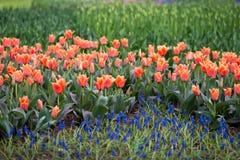 As flores e as camas de flor na cidade estacionam na primavera Fotos de Stock