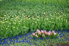 As flores e as camas de flor na cidade estacionam na primavera Fotos de Stock Royalty Free