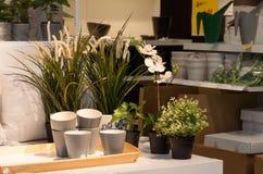 As flores e a casa desnucleiam na loja foto de stock royalty free