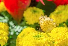 As flores e os insetos no parque Imagens de Stock