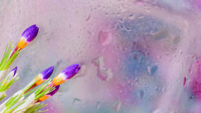 As flores elegantes do açafrão atrás da janela molhada com chuva realística deixam cair Fundo abstrato, reticulações modernas Imagens de Stock Royalty Free