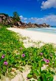 As flores em Anse grandioso encalham nos seychelles Fotos de Stock Royalty Free