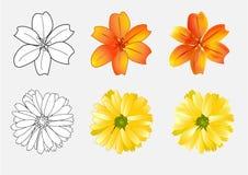 As flores esboçam e cor, ilustração Imagem de Stock Royalty Free