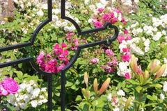 As flores estão crescendo entre sepulturas em um cemitério em Avranches (França) Foto de Stock