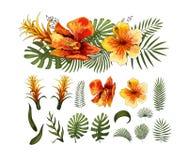 As flores exóticas, as folhas tropicais projetam elementos Ilustrações florais do vetor