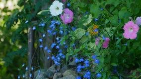 As flores florescem no jardim verde filme