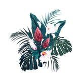 As flores, as folhas de palmeira, a folha da selva, os hibiscus e o protea tropicais florescem ilustração royalty free
