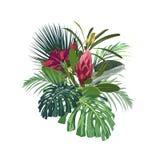 As flores, as folhas do monstera da palma, os hibiscus e o protea tropicais florescem ilustração do vetor