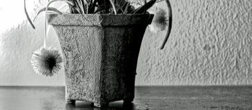 As flores inchado do potenciômetro de flor preto e branco com arte contemporânea projetam Imagem de Stock