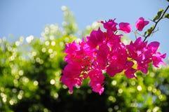 As flores mindinhos estão no jardim com fundo do bokeh Imagens de Stock Royalty Free