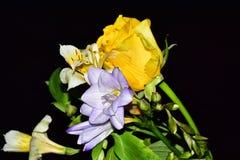 As flores muito consideravelmente multicoloridos fecham-se acima foto de stock royalty free