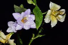As flores muito consideravelmente multicoloridos fecham-se acima fotos de stock royalty free