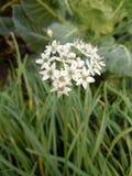 As flores no inverno Imagens de Stock Royalty Free