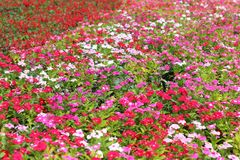 As flores no jardim podem ser ao fundo Fotografia de Stock Royalty Free