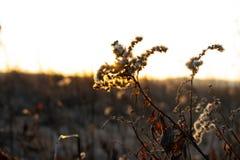 As flores no por do sol são apenas beleza fotos de stock royalty free