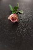 As flores picam em uma obscuridade de madeira Imagens de Stock