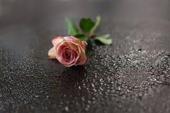 As flores picam em uma obscuridade de madeira Foto de Stock Royalty Free