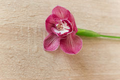 As flores picam gotas da água em uma luz de madeira Imagens de Stock