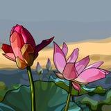 As flores pintadas picam lótus em um fundo da natureza Imagem de Stock