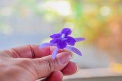 As flores roxas à disposição, dão-lhe flores imagem de stock royalty free