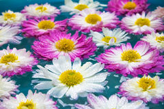 As flores roxas em azuis celestes azuis molham, fundo da natureza, papel de parede fotografia de stock royalty free