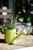 As flores roxas em um amarelo podem Fotografia de Stock Royalty Free