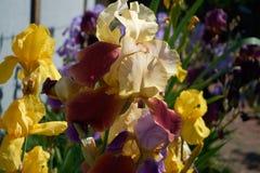 As flores são amarelas Fotos de Stock