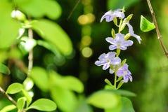 As flores são bonitas imagens de stock royalty free