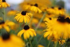 as flores são bonitas Imagens de Stock
