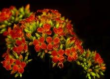 As flores são dotado ao amado Imagens de Stock