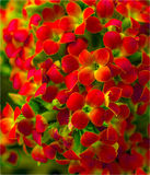 As flores são dotado ao amado Foto de Stock
