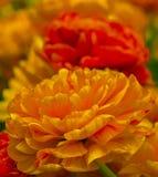 As flores são dotado ao amado Fotos de Stock
