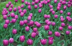 As flores são dotado ao amado Imagens de Stock Royalty Free