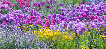 As flores selvagens fotografia de stock royalty free