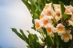 As flores selvagens amarelas brancas bonitas gostam da trombeta dada forma com o céu do céu azul e o verde deixa o fundo fotos de stock