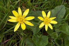 O pantanal floresce a flor na mola fotos de stock