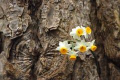 Flores selvagens em uma casca Imagens de Stock