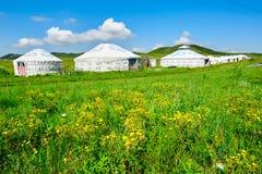 As flores selvagens e os yurts do mongolian Foto de Stock Royalty Free