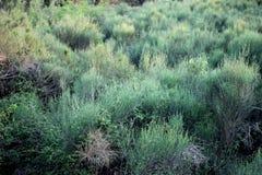 As flores selvagens fazem feno o prado na primavera imagens de stock royalty free