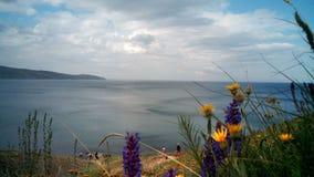 As flores selvagens na costa de Koktebel latem, Crimeia imagem de stock