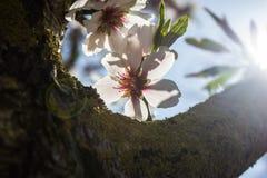 As flores suportam a luz Foto de Stock