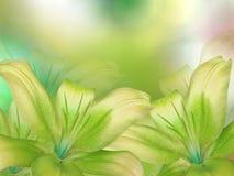 As flores verde-amarelas dos lírios, na verde-amarelo-turquesa borraram o fundo closeup Foto de Stock