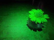 As flores verdes na tabela com um ponto verde iluminam-se imagem de stock royalty free