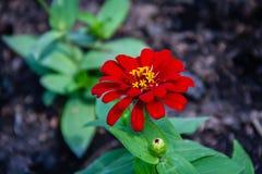 As flores vermelhas borraram o fundo fotos de stock royalty free