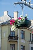 As flores vermelhas do gerânio do jardim, fim acima do tiro/gerânio florescem/flores do Lavatera/petúnia do verão no jardim no te Fotografia de Stock Royalty Free