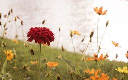 As flores vermelhas estão para fora belamente no lado da associação fotos de stock