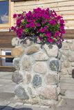 As flores vermelhas florescem perto de uma casa rural de madeira Imagem de Stock Royalty Free