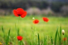 As flores vermelhas freen dentro o fundo Imagem de Stock Royalty Free